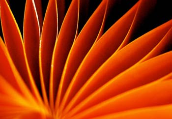 Deutsch Kerrigan careers orange flower
